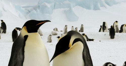 Panique en Antarctique!